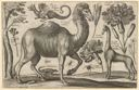 Image of Camel, Giraffe, and Other Animals, after Wenceslaus Hollar